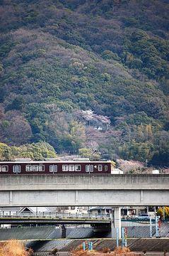 Dsc_4979sakura