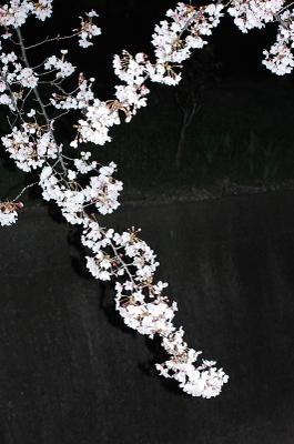 Dsc_0045yozakura