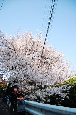 Dsc_0046sakura