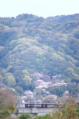 Dsc_0058satsuki