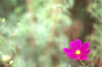 Img_0002cosmos