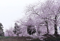 Img_0014ryosakura