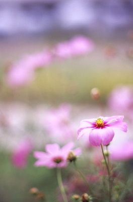 Img_0016cosmos