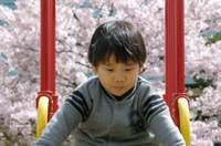 P4160037yusuberidai