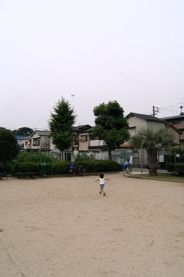 P6100028hikoki